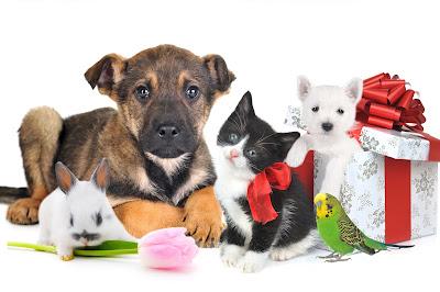 Las mascotas más lindas para tu casa ¿Cuál prefieres?