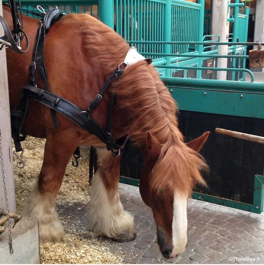 jutland cheval ecurie carlsberg city copenhague danemark