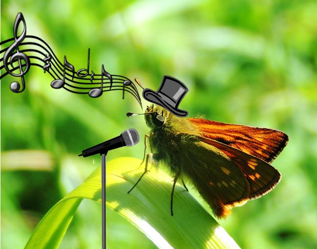 Mariposa cantante