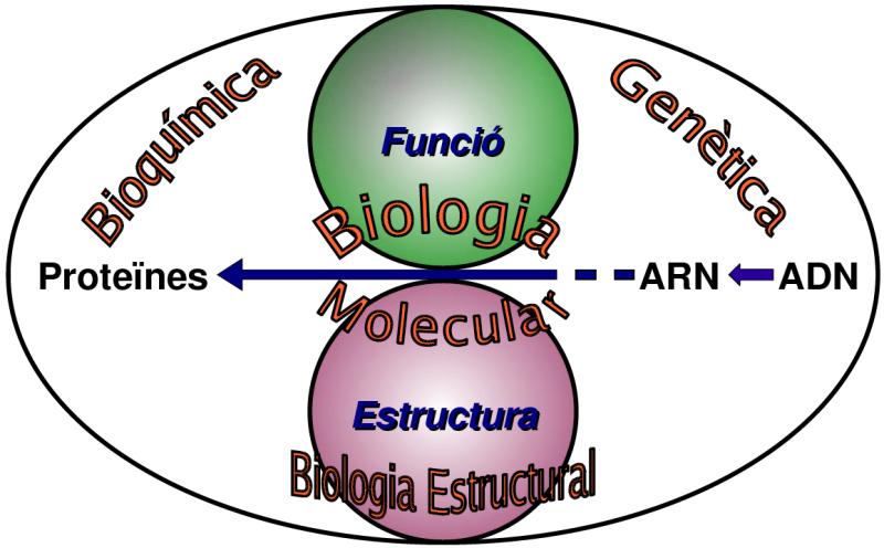 Relaciobiologiamolecularambaltrescsbiologia