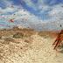 Plaga de langostas invade Egipto