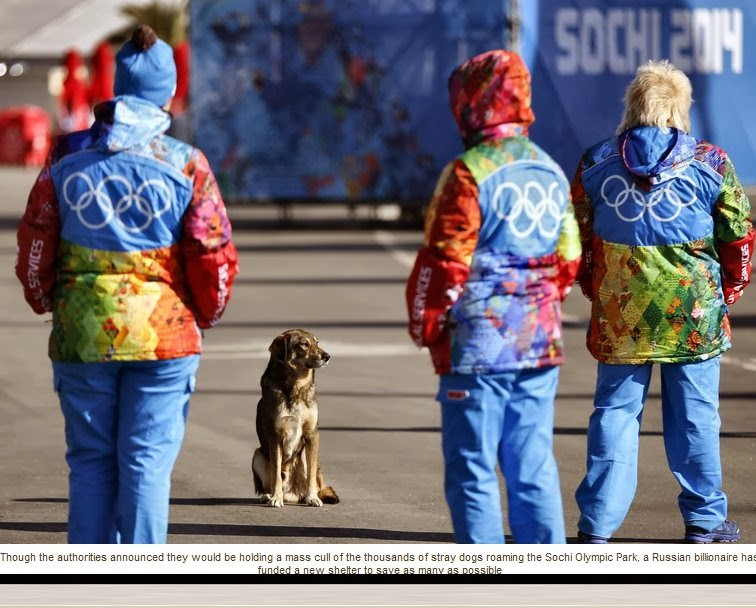 http://www.independent.co.uk/news/world/europe/sochi-olympic-parks-condemned-stray-dogs-saved-by-russian-billionaire-9118727.html