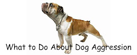 What to Do About Dog Aggression
