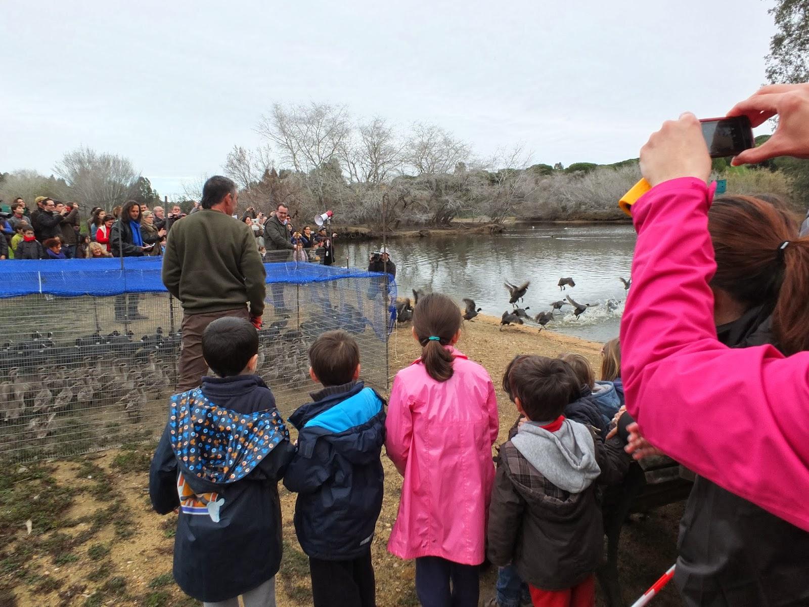 Día Mundial de los Humedales 2014.  Celebración del Grupo Local SEO-Sevilla de SEO/Birdlife en la Cañada de los Pájaros (Puebla del Río). Educación Ambiental