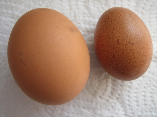 Large Hyline Egg and Small Speckledy Egg