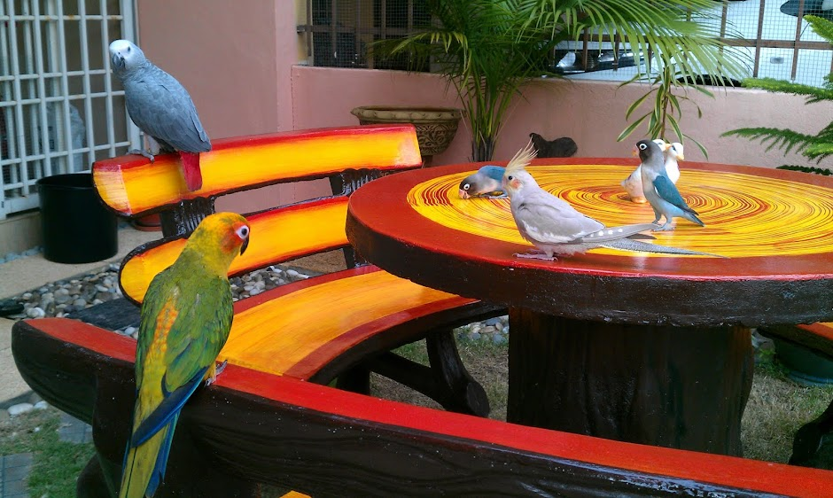 My Parrot Gallery