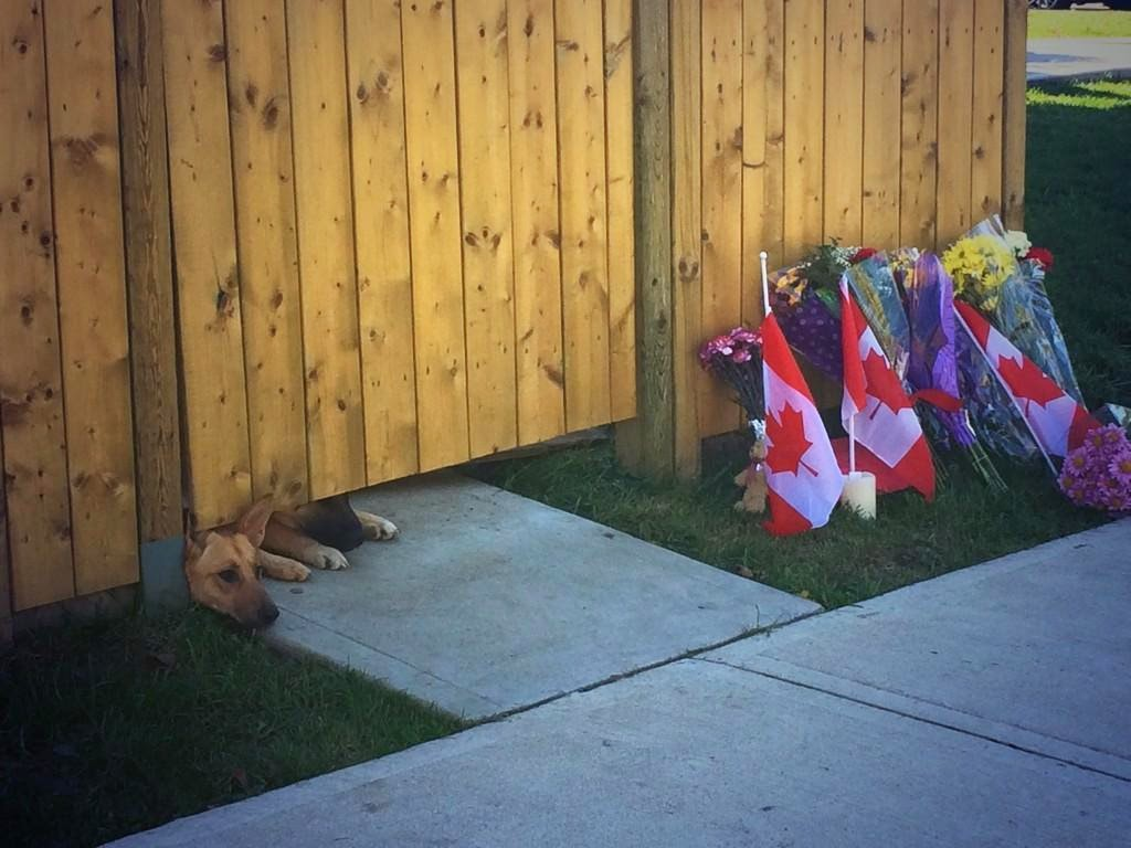 http://mashable.com/2014/10/23/canadian-soldiers-dogs-cirillo/