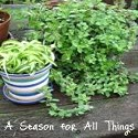 A Season For All Things