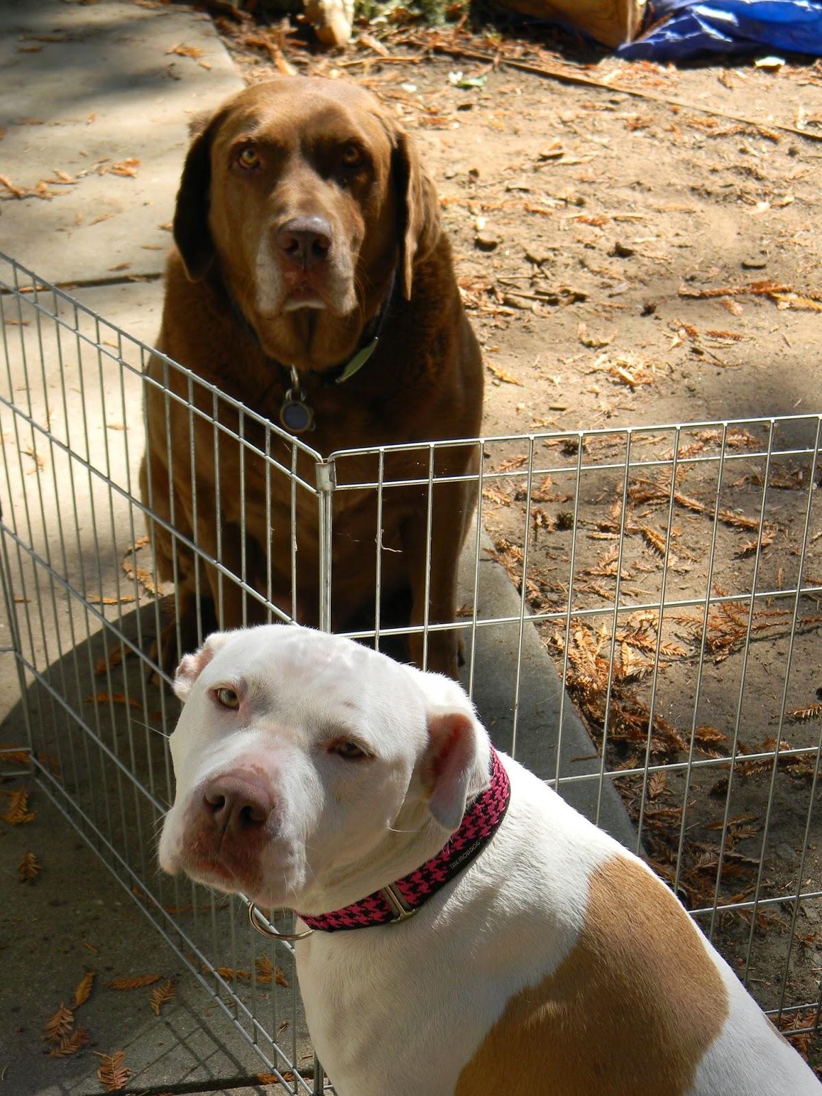Santa Cruz Dogs