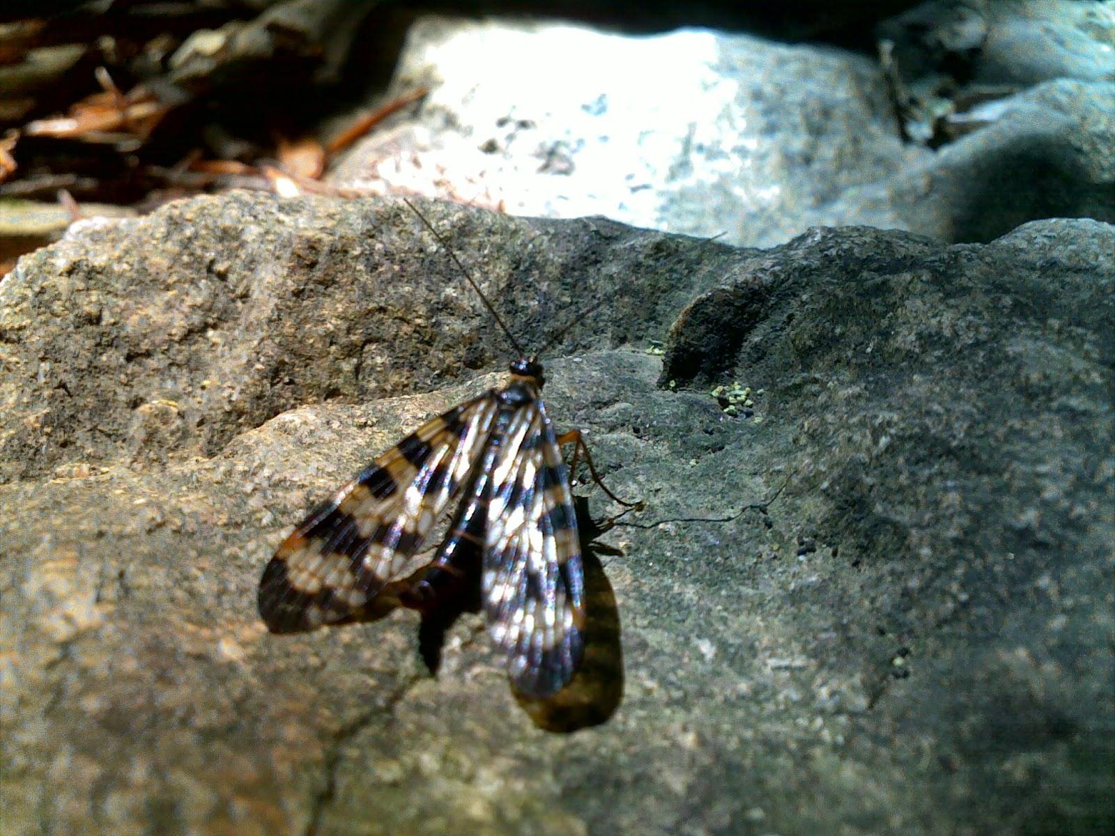 Kelebek Fotoğrafı - Tuba DİK