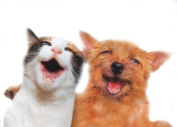 Image result for cat friend images