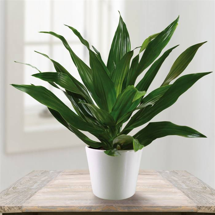 Tech news 24h the top 5 plants that rapidly improve air for Nasa indoor plant list