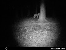Se ulven fra den 4. dec på film her