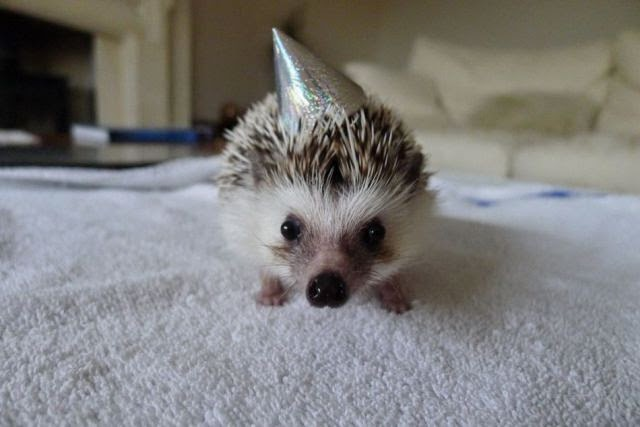 Funny animals of the week - 1 August 2014 (40 pics), animal photos, animal gallery