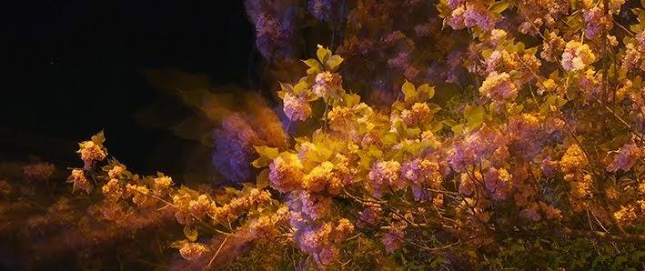 Fleur nuit 1