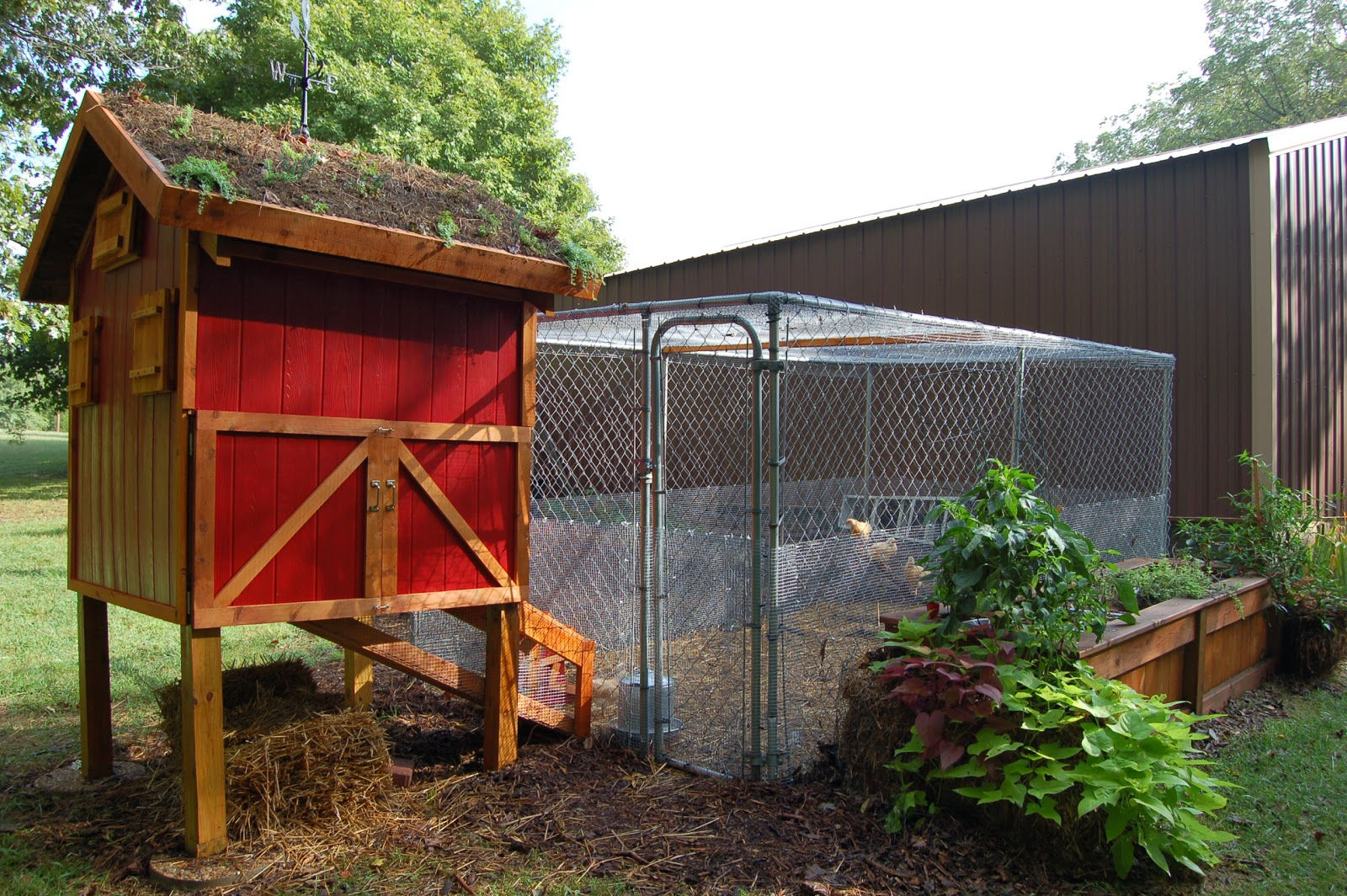 gardening with chickens part 2 the setup community chickens