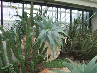 Aloe and Succulents at Kew Gardens