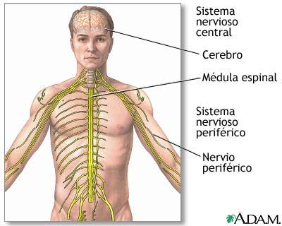 Fisiología: Unidad IV: Sistema nervioso