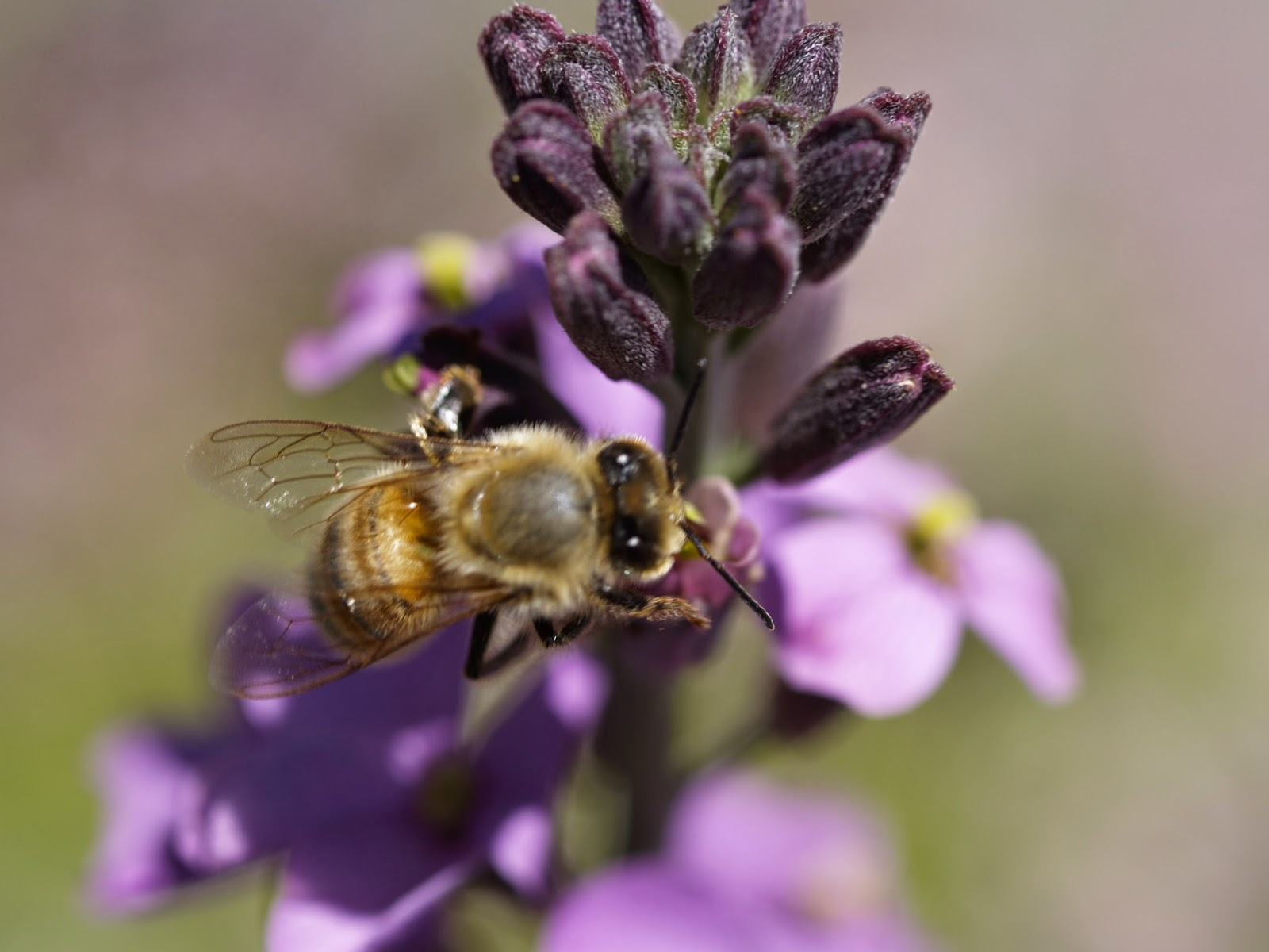 bee on a flower eating pollen