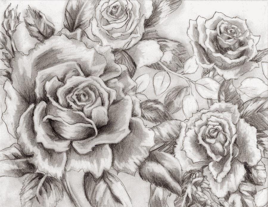dibujo a lápiz de rosas