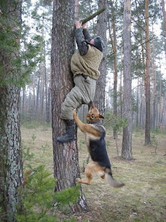 funny picture german shepherd bites man climbed into the tree