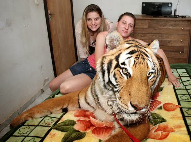Brazilian Family Lives with 7 Tigers