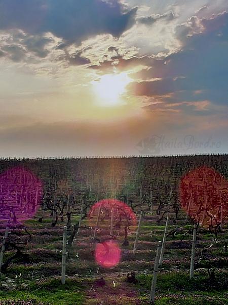 apus gramma wines iasi