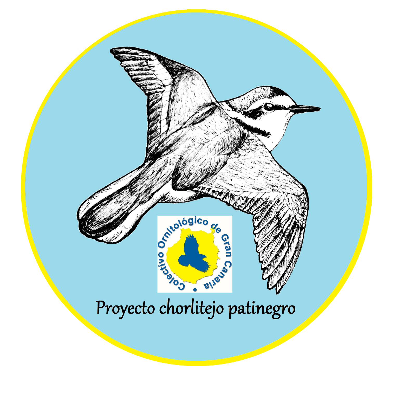 Proyecto chorlitejo patinegro