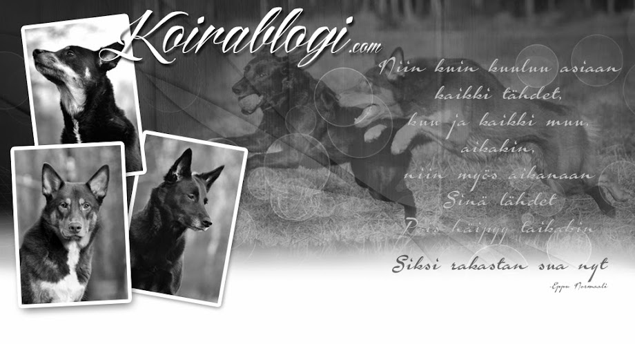 Koirablogi.com