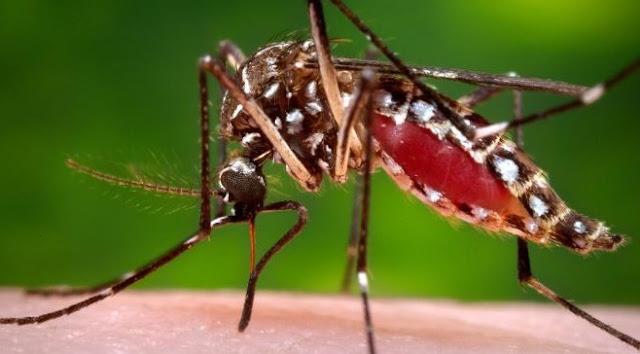 5 Fakta Terbaru tentang Virus Zika