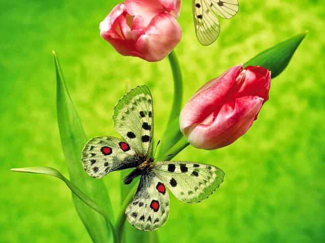 hinh nen hoa dep cho may tinh