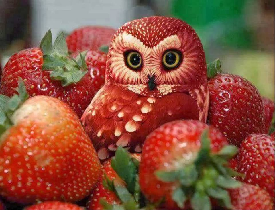 Fruit Carving Arts 3