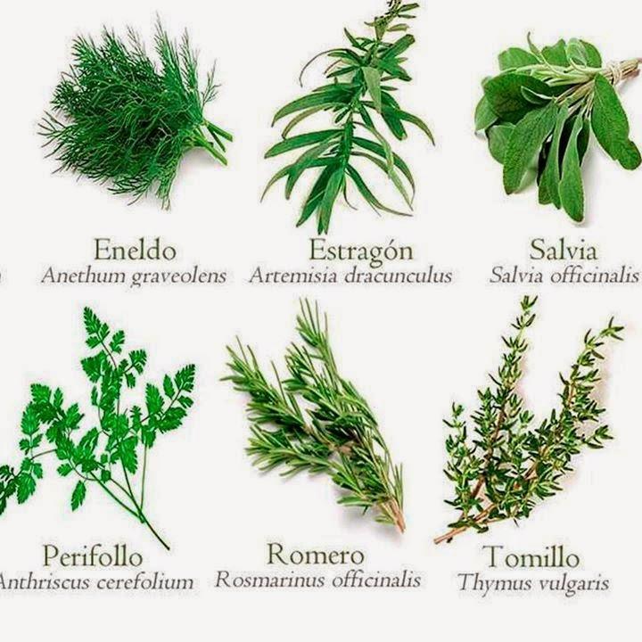 tu salud 6 plantas medicinales para la salud f ciles de