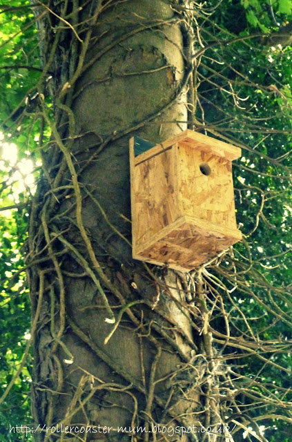 bird nestbox #homesfornature made at B and Q