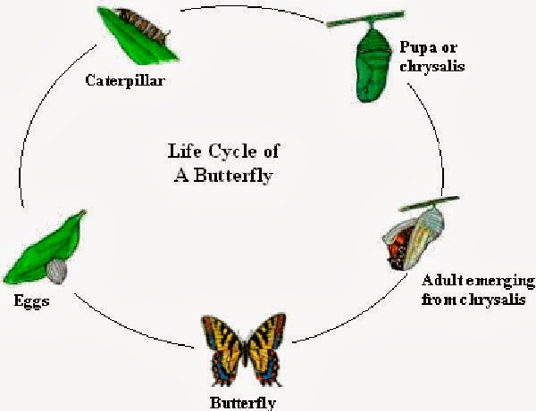 The cycle of homework