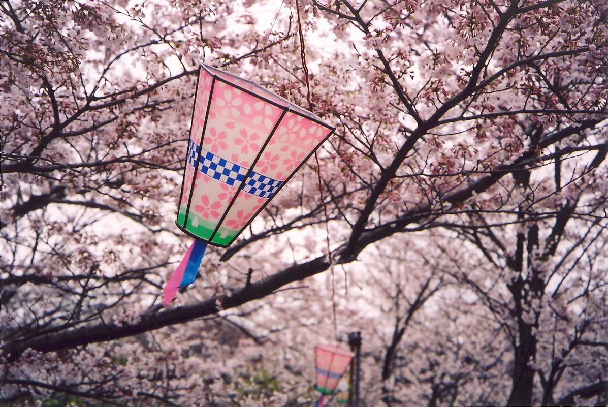 Sakura s lampášmi