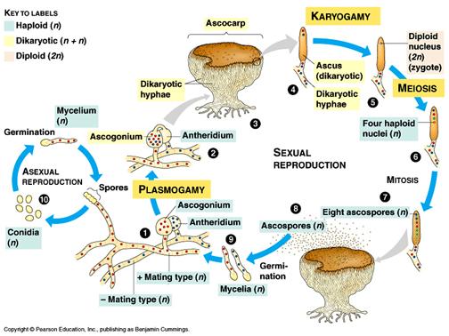 Biologi: Klasifikasi