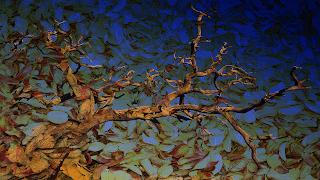 12 Arvore_despida_ sobre texturas de folhas_Escurecer_255