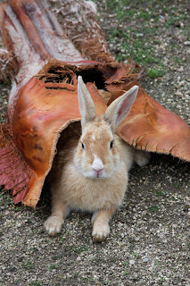 Rabbit Island Okunoshima Japan Bunny