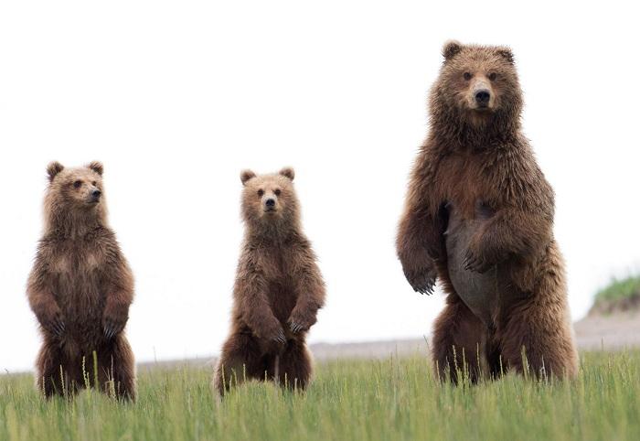 Adorables imágenes de osos disfrutando libres de un día de