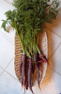 Purple Carrots in a Basket