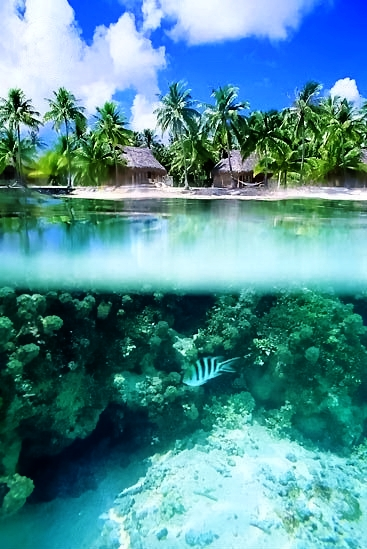 Tahiti Beach A1 Pictures