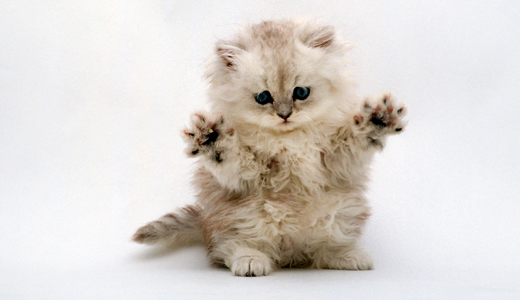 Cute, Adorable, and Uplifting! Collection-of-cute-baby-animal-wallpapers-16