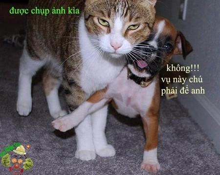 Chó mèo zui