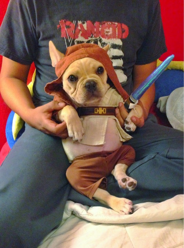 star wars pet costume-Jedi