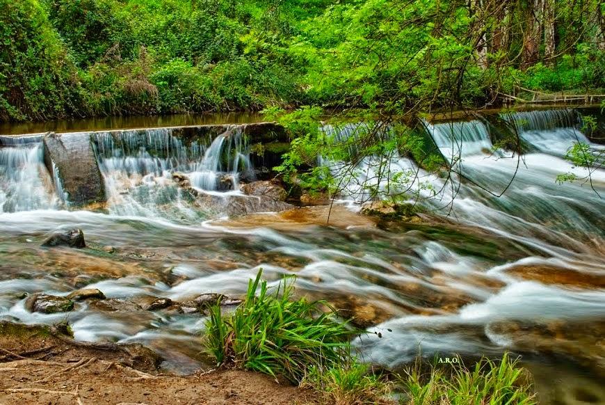 Río El Bosque