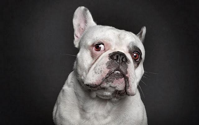 fotografia-artistica-de-perros