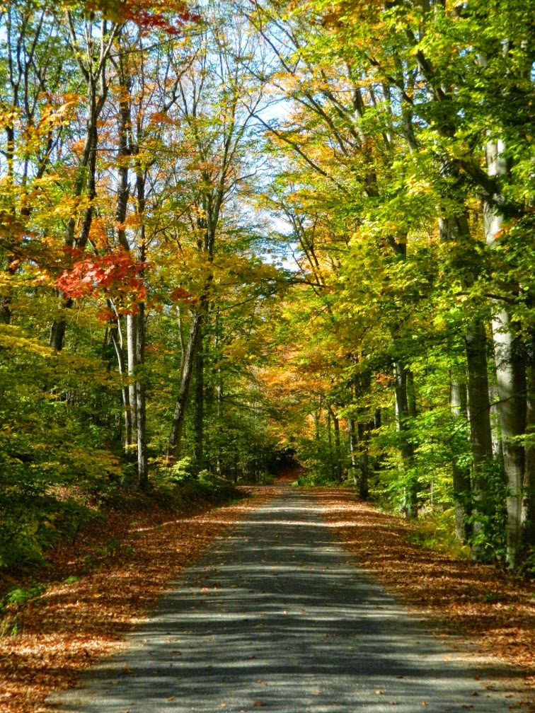 Muskoka fall colours cottage road by garden muses--a Toronto gardening blog