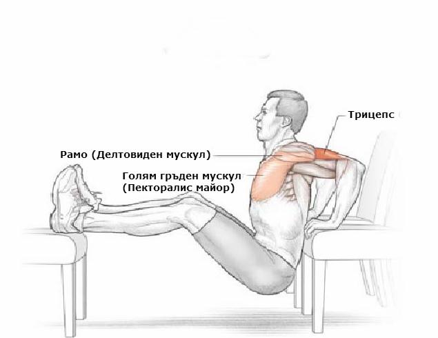 Кои мускули вземат участие при изпълнението на кофички на пейка
