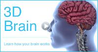 3d Brain8